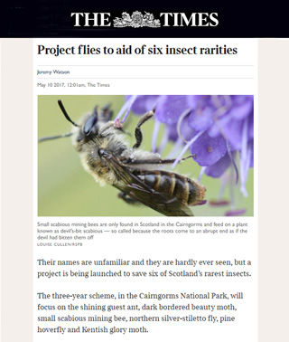 Buglife in The Times Newspaper