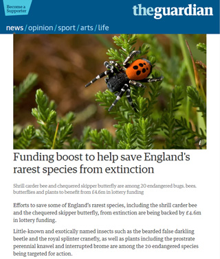 Buglife in The Guardian Newspaper - Boston Seeds