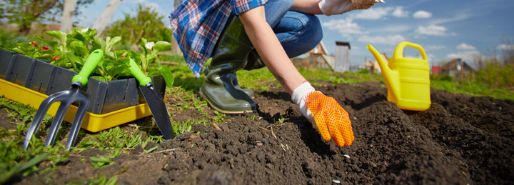 Gardener planting wildflower plants - Boston Seeds