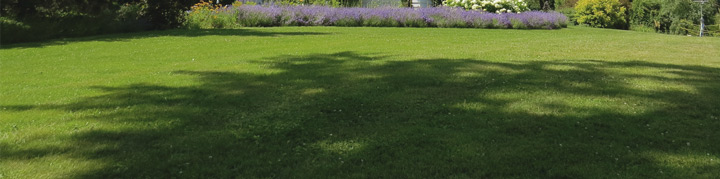 Lawn in the shade - Grass seed for shady lawns - Boston Seeds