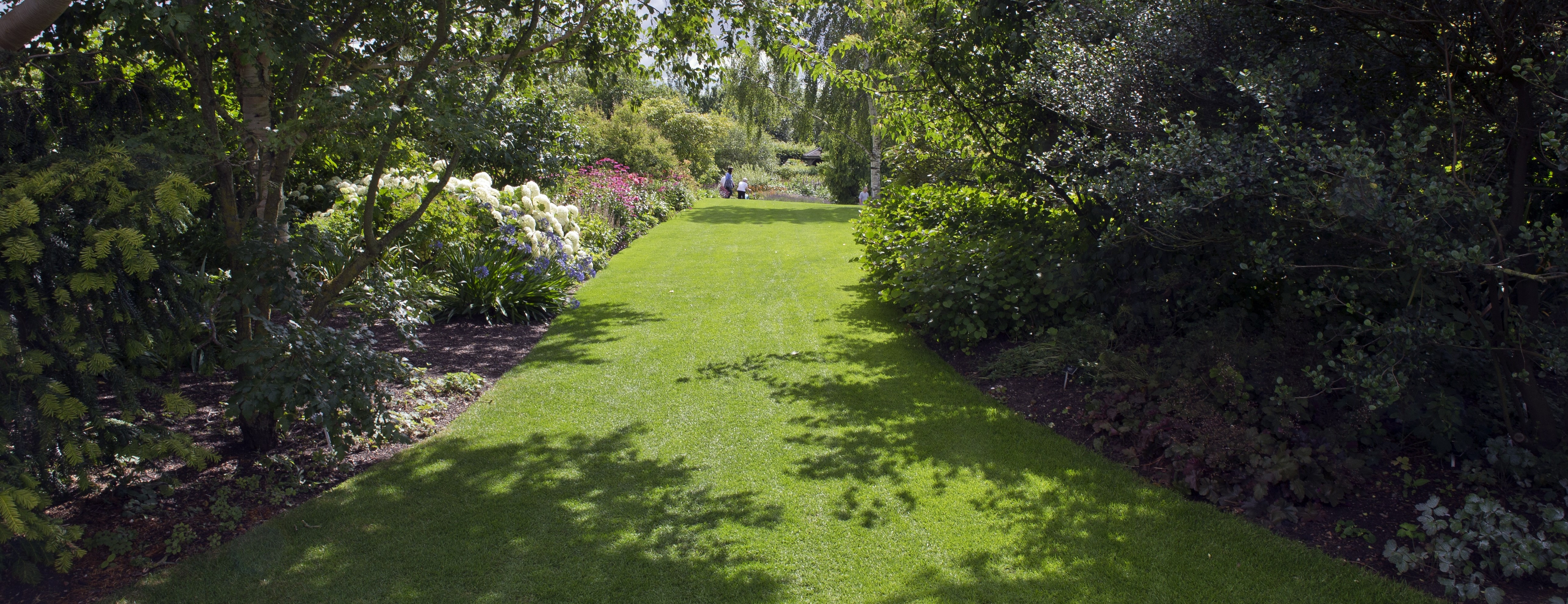 Shady lawn grass seed - Boston Seeds