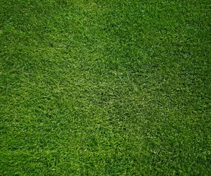 Lush Green Lawn - Hints & Tips for Beautiful Lawns - Boston Seeds