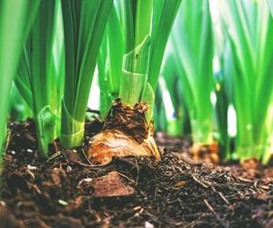 Bulb Planting Guide