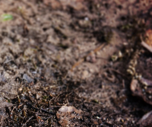 Mud and Leaves - Compaction, Thatch and Moss - Boston Seeds