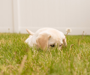 Puppy in Grass - Things That Can Affect Your Grass - Boston Seeds