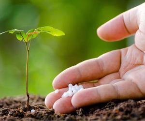 Guide to Granular Fertiliser - Boston Seeds