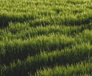 Green Grass - Choosing the Best Grass Seed - Boston Seeds