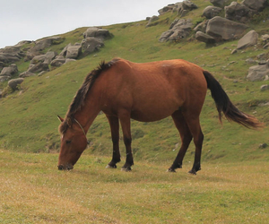 Horse Eating Grass - Toxic Plants for Horses - Boston Seeds
