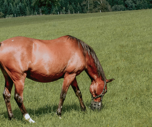 Horse Eating Grass - Paddock Care and Maintenance - Boston Seeds