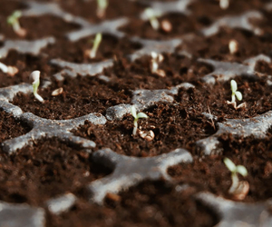 Seed Germination - How Much Wildflower Seed Do I Need? - Boston Seeds