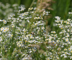 How to Establish Wildflowers - Boston Seeds