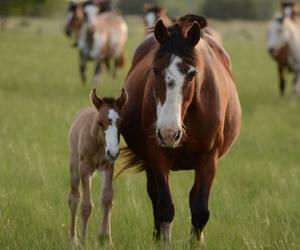 Horse Paddock Care - Laminitis
