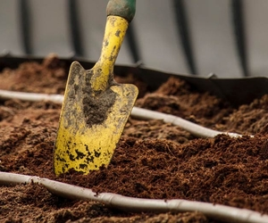 Soil and Trowel - How to Maintain a Wildflower Garden - Boston Seeds