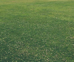 Overseeding an Existing Lawn - Boston Seeds