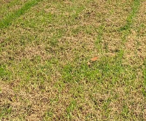 Yellow Grass - How to Repair Your Lawn with Grass Seed - Boston Seeds