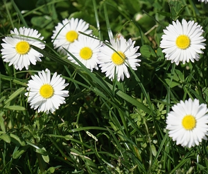 May Lawn Care Tips - Boston Seeds