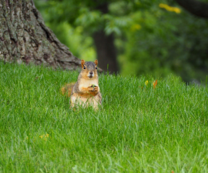 Autumn lawn care tips - Boston Seeds