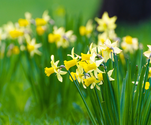 March Lawn Care Tips - Boston Seeds
