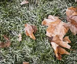 November Lawn Care Tips - Boston Seeds