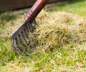 Scarifying with a rake - How to Scarify a Lawn Without a Scarifier - Boston Seeds