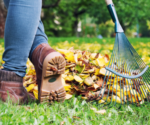 October Lawn Care Tips - Autumn Lawn Maintenance - Boston Seeds