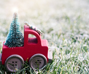December Lawn Care Tips - Boston Seeds