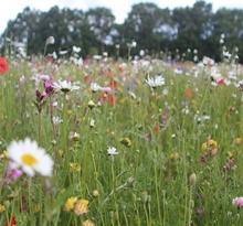 Wildflower Turf - Buy Wildflower Turf online today