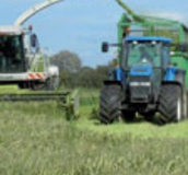Arable Silage Mixtures