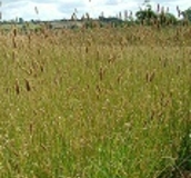 Perennial Game Cover Crops