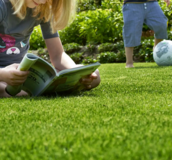 Lush green grass - Buy grass seed from Boston Seeds