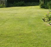 Landscape Grass Seed