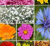ColourMax Wildflower Seed Mix - Boston Seeds