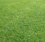 Green Grass - Buy grass seed from Boston Seeds