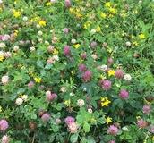 Nectar Flower Mixtures