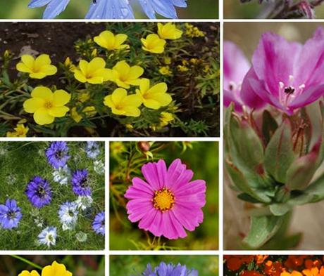 ColourMax 2 - Universal Bloom