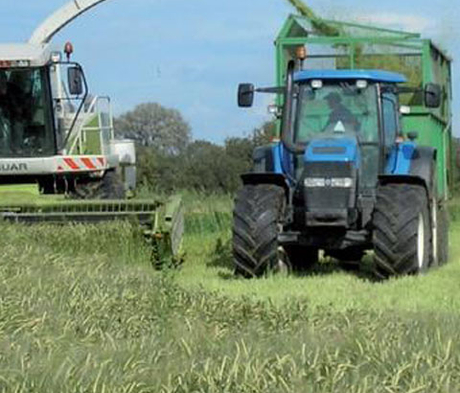 BS Arable Silage Mixture 3