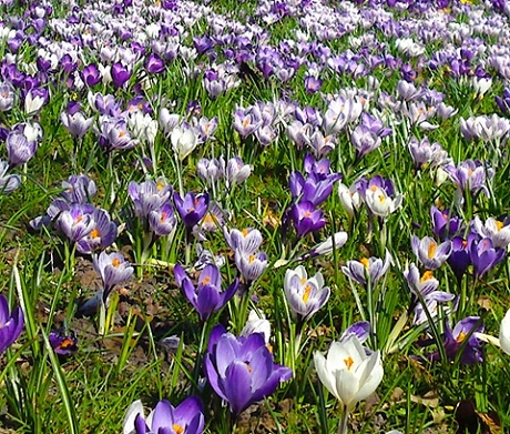Blue Grass Bulb Collection