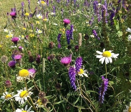 BS7M: Hedgerow & Light Shade Wildflower Seeds