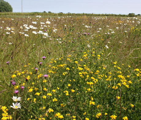 CSS3 Wildflower Meadow, also suitable for AB8