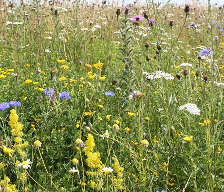BSXP 100%: Dual Purpose Wildflower Seeds