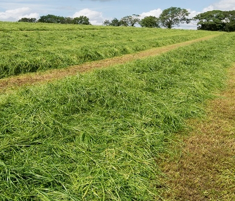 BS Aber High Sugar Grass - Long Term Multi Cut (Without Clover) - Long Term Ley 5+ Years