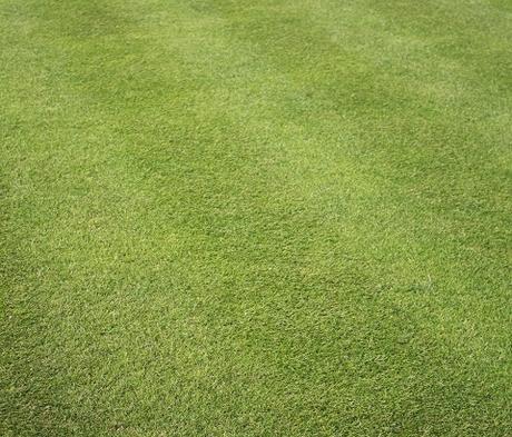 BS Renovator - Lawn Repair Grass Seed