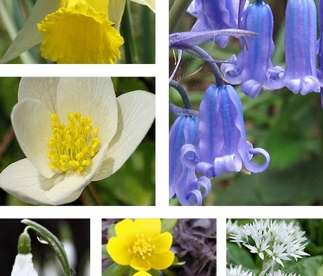 BS Woodland Wildflower Bulb Collection
