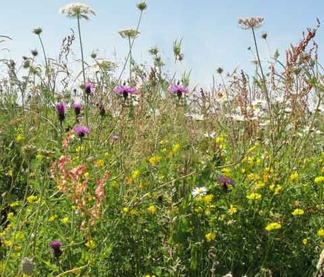 BS14M: Wild Bird Seed Wildflower Meadow Seeds