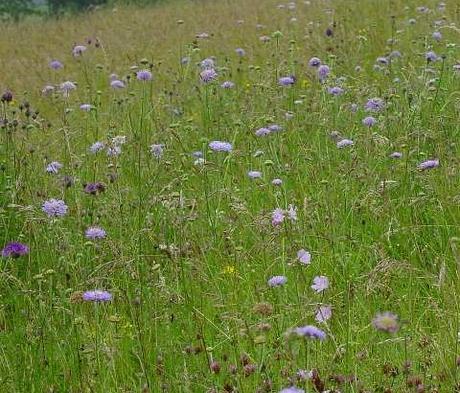 BS2M: Chalk & Limestone Soils Wildflower Seeds
