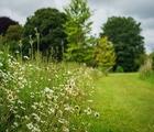 UK Native Wildflower Turf