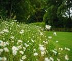 Native Wildflower Turf