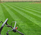 BS Premier Lawn Grass Seed