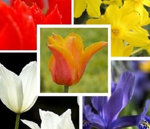 Gardener's Deluxe Bulb Collection