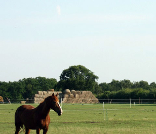 BS Economy Horse Paddock Grass Seed